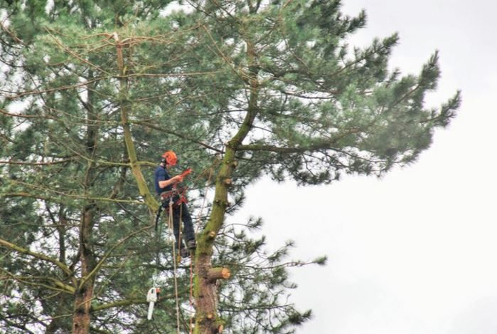 tree trimming companies